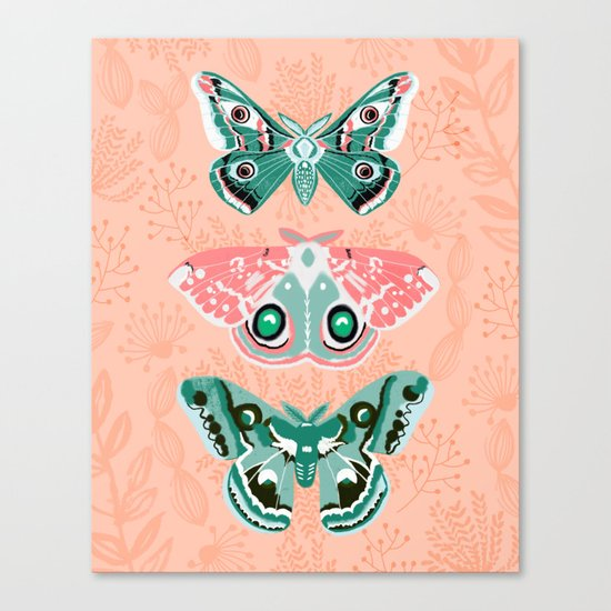 Lepidoptery No. 3 by Andrea Lauren  Canvas Print
