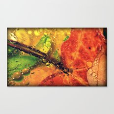 Wet Red Maple Canvas Print
