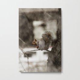 Squirrel Through the Screen Metal Print