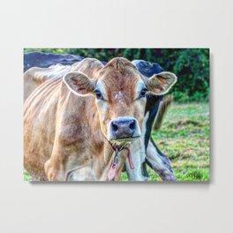 Cow 66 Metal Print