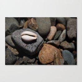 Teeth Shell Canvas Print
