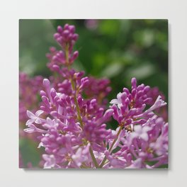 Spring lilac Metal Print