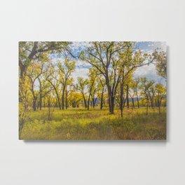 Cottonwoods, Theodore Roosevelt NP, ND 2 Metal Print