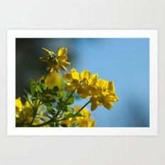 Yellow Spring (coronilla) 11 Art Print