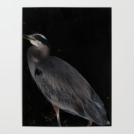 Heron at night Poster