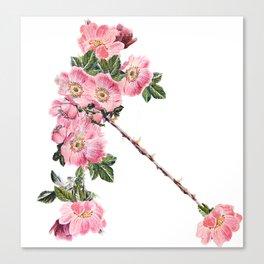Briar Rose 7B Canvas Print