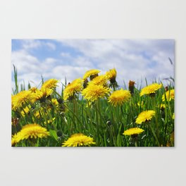 Dandelion meadow Canvas Print