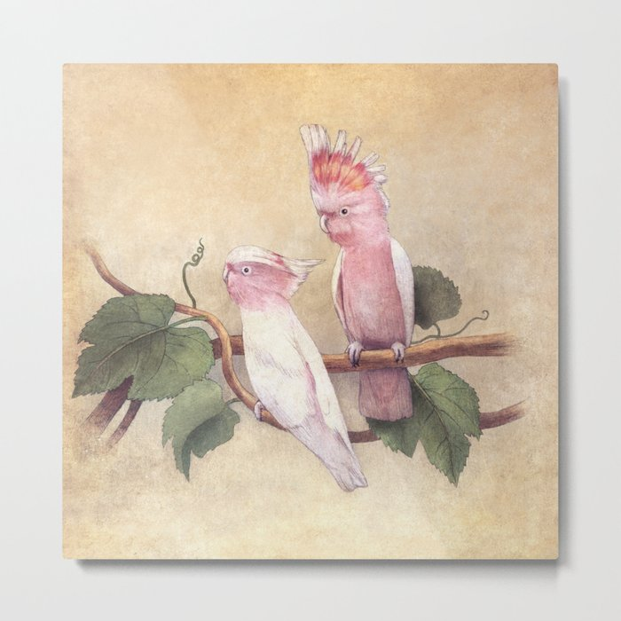 Pink Cockatoos  Metal Print