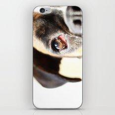 Eye of a boxer dog iPhone & iPod Skin