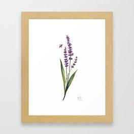 Watercolor Lavender Framed Art Print