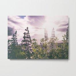 Lupine Metal Print