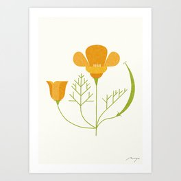 California Poppy Art Print
