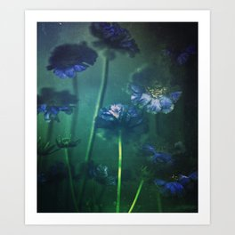 Scabious Blue Art Print