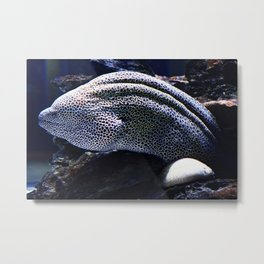 Honeycomb Moray Eel Metal Print