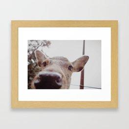 Deer Selfie Framed Art Print