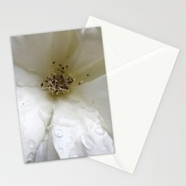 White Water Rose Stationery Cards