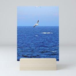 Northern Gannets in Flight Mini Art Print