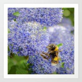 Bumblebee on Purple Flowers Art Print