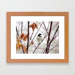 Chicka Chickadee Framed Art Print