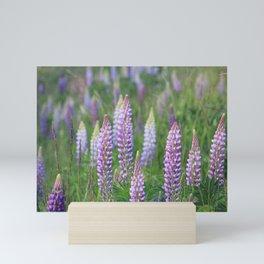 The Wild Purple Lupine Field on Fidalgo Island Mini Art Print