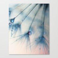 dandelion Canvas Prints featuring dandelion by Ingrid Beddoes