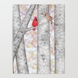 cardinals and birch trees Poster