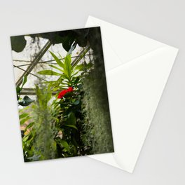 Hibiscus No. 2 Stationery Cards