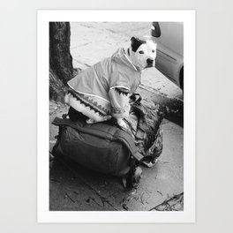 dog in a sweater Art Print