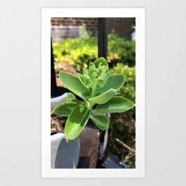 Brilliant Green Succulent Art Print