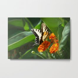 """""""Summer Afternoon"""" - Yellow Swallowtail Butterfly Metal Print"""