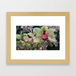 Pink and Green Orchid Framed Art Print