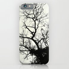 teasing branches (hard shell) iPhone 6s Slim Case