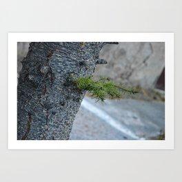 The detail of tree Art Print