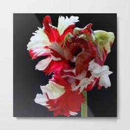 Parrot Tulip Metal Print