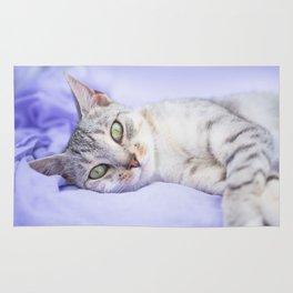 Silver tabby cat on purple blanket Rug