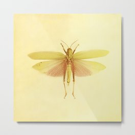 Vintage Inspired Pastel Yellow Salmon Butterfly Metal Print