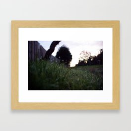 Cold Dawns Golden Dew Framed Art Print