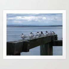 Auckland Birds  Art Print