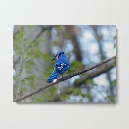 Showing his Colors Metal Print