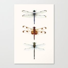 Dragonfly Collector Canvas Print
