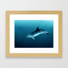 """Blackfin the Dolphin"" by Amber Marine ~ Digital Art, (Copyright 2014) Framed Art Print"