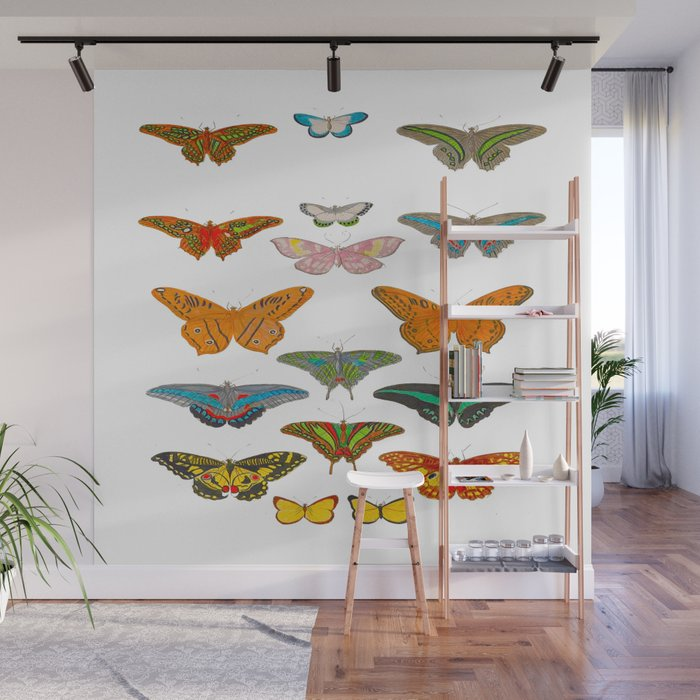Vintage Scientific Illustration Of Colorful Butterflies Wall Mural
