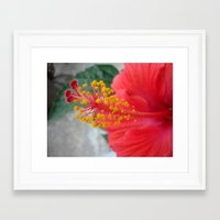 hibiscus Framed Art Prints featuring Hibiscus by BACK to THE ROOTS