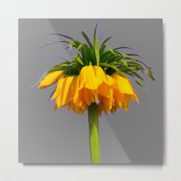 CONTEMPORARY GOLDEN YELLOW CROWN IMPERIAL FLOWERS Metal Print