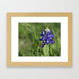 Bluebonnet Buzzer Framed Art Print