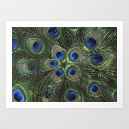 Peacock Flower Art Print