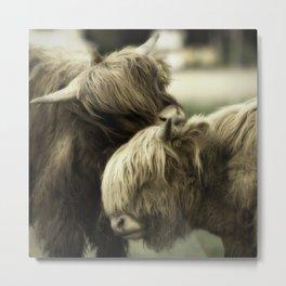 Highland Cattle I Metal Print