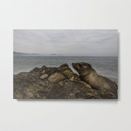 Seal Pups Metal Print