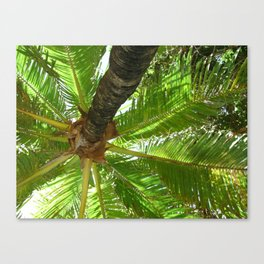 Coconutty Canvas Print