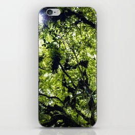 Sunlight Filtering through Ferns and Palm Trees in the Lush Rainforest of Mombacho Volcano, Nicaragu iPhone Skin